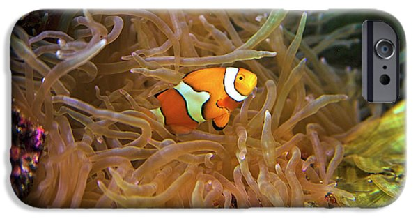 Close Up Of A Clown Fish In An Anemone IPhone Case by Miva Stock