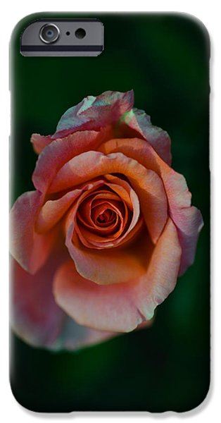 Close-up Of A Pink Rose, Beverly Hills IPhone 6s Case by Panoramic Images