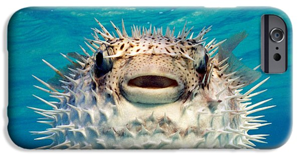 Close-up Of A Puffer Fish, Bahamas IPhone Case by Panoramic Images