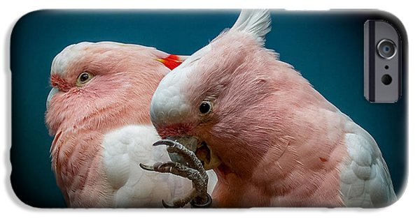 Cockatoos IPhone 6s Case by Ernie Echols