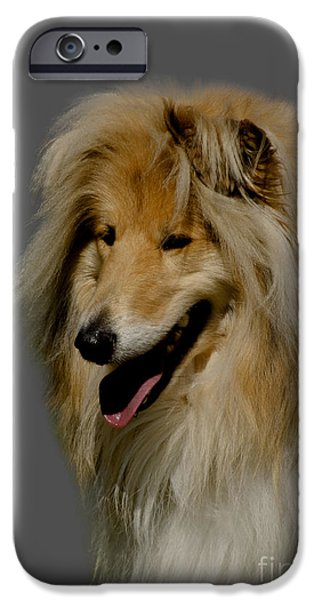 Collie Dog IPhone Case by Linsey Williams