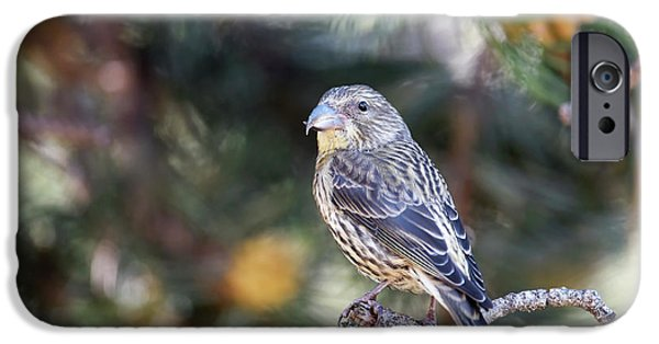 Common Crossbill Juvenile IPhone 6s Case by Dr P. Marazzi