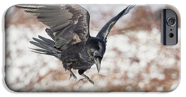 Common Raven IPhone Case by Bill Wakeley
