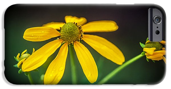 Coneflowers Echinacea Yellow Painted    IPhone Case by Rich Franco