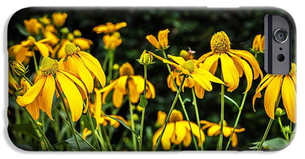 Coneflowers Echinacea Yellow  IPhone Case by Rich Franco