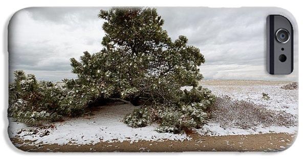 Conifer On A Snowy Cape Cod Beach IPhone Case by Michelle Wiarda