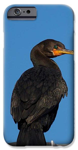 Cormorant 1 IPhone Case by Allan Morrison