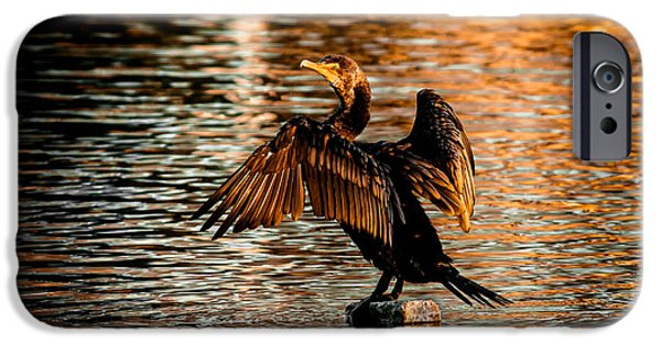Cormorant On Gold IPhone Case by Robert Frederick