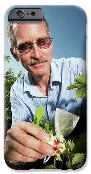 Cotton Pollination Research IPhone Case by Stephen Ausmus/us Department Of Agriculture