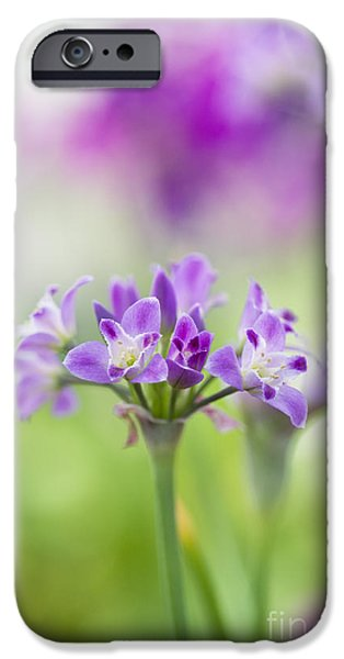 Crinkled Onion Flower IPhone Case by Tim Gainey