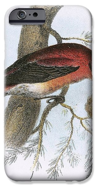 Crossbill IPhone 6s Case by English School
