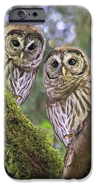 Curious Barred Owlets IPhone Case by Jennie Marie Schell