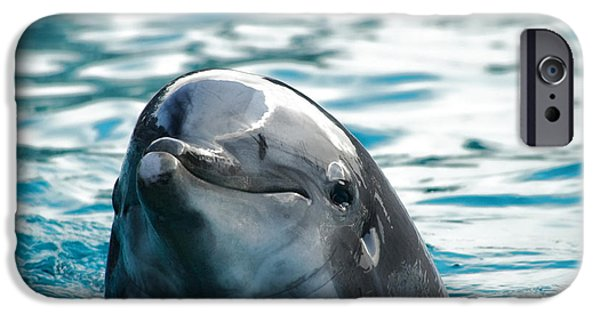 Curious Dolphin IPhone 6s Case by Mariola Bitner