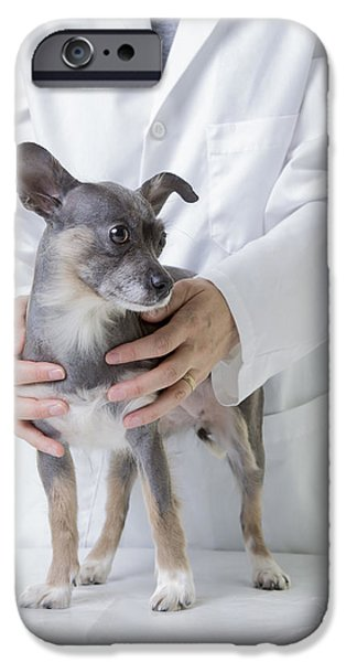 Cute Little Dog At The Vet IPhone Case by Edward Fielding