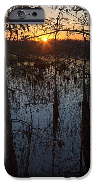 Cypress Swamp At Sunrise IPhone Case by Jim West