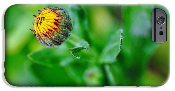 Daisy Bud Ready To Bloom IPhone Case by Kaye Menner