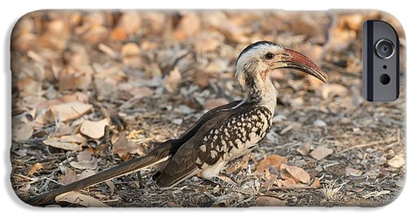Damara Red-billed Hornbill Foraging IPhone 6s Case by Tony Camacho