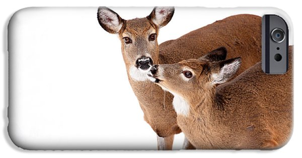 Deer Kisses IPhone 6s Case by Karol Livote