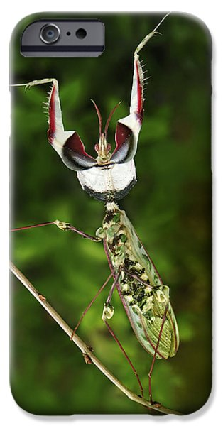 Devils Praying Mantis In Defensive IPhone 6s Case by Thomas Marent