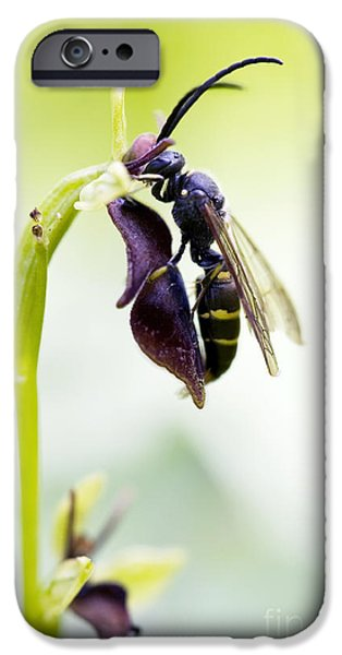 Digger Wasp And Fly Orchid IPhone Case by Tim Gainey