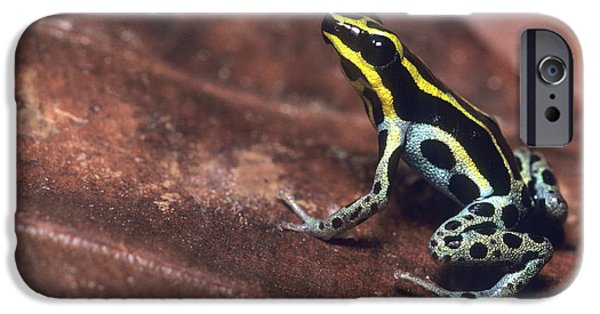 Diurnal Poison-arrow Frog (also Known IPhone Case by Thomas Wiewandt