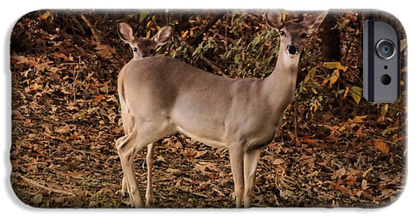 Doe And Fawn - Deer - Wildlife IPhone Case by Jai Johnson