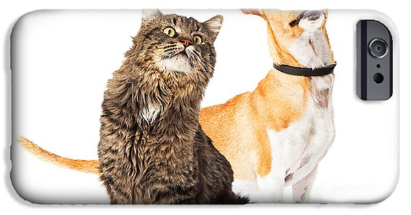 Dog And Cat Looking Up Together IPhone Case by Susan  Schmitz