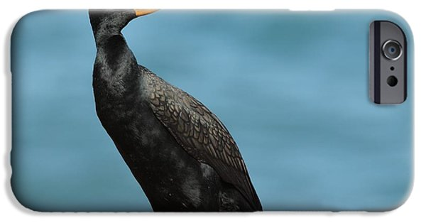 Double Crested Cormorant Along Coastline IPhone Case by Daniel Behm