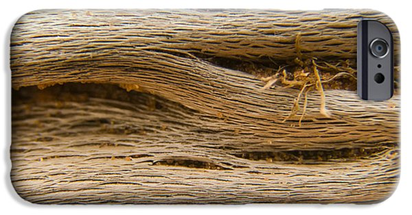 Driftwood 1 IPhone Case by Adam Romanowicz