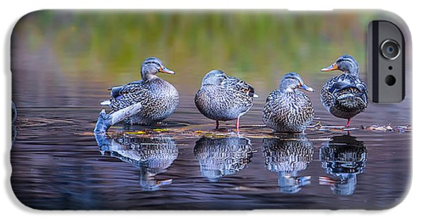 Ducks In A Row IPhone Case by Larry Marshall