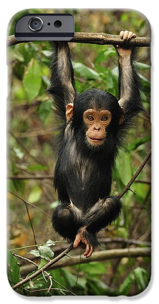 Eastern Chimpanzee Baby Hanging IPhone 6s Case by Thomas Marent