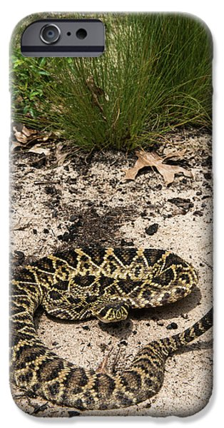 Eastern Diamondback Rattlesnake IPhone 6s Case by Pete Oxford