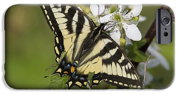 Eastern Tiger Swallowtail IPhone Case by Linda Freshwaters Arndt