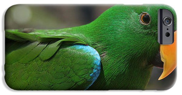 Eclectus Roratus IPhone Case by Sharon Mau