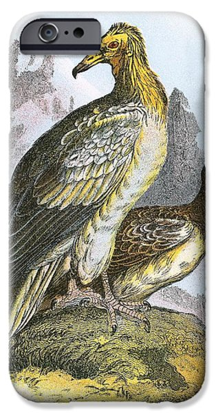 Egyptian Vulture IPhone 6s Case by English School