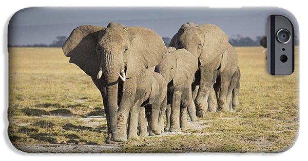Elephant Herd  IPhone Case by Richard Garvey-Williams