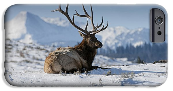 Elk In Yellowstone IPhone Case by Wildlife Fine Art