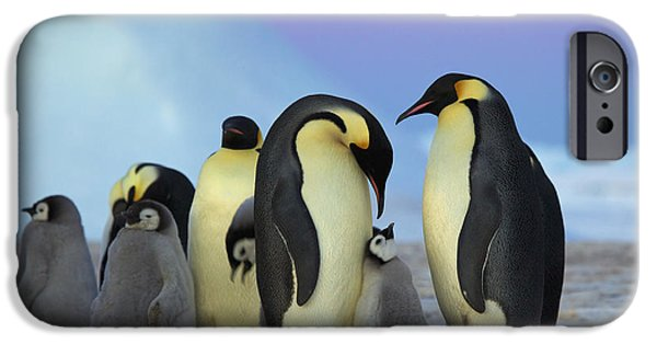 Emperor Penguin Parents And Chick IPhone Case by Frederique Olivier
