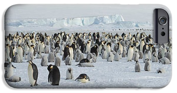 Emperor Penguins Aptenodytes Forsteri IPhone 6s Case by Panoramic Images