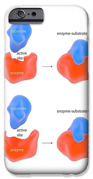 Enzyme Reaction Models IPhone Case by Science Photo Library