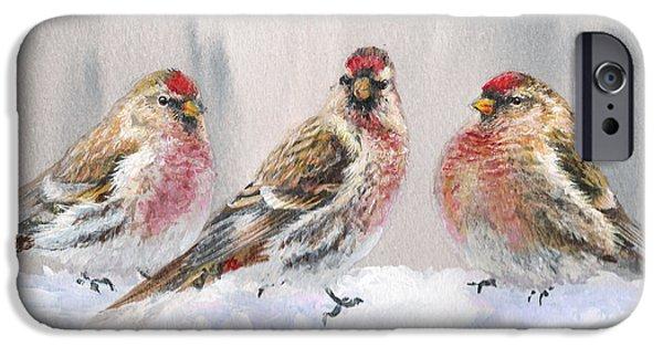 Snowy Birds - Eyeing The Feeder 2 Alaskan Redpolls In Winter Scene IPhone 6s Case by Karen Whitworth