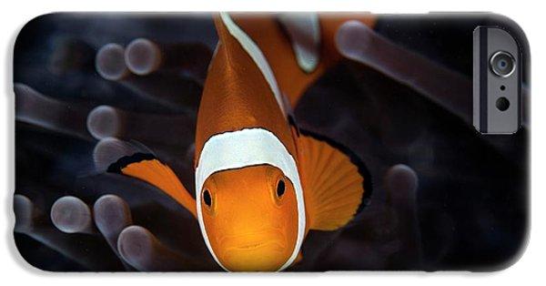 False Clownfish IPhone Case by Ethan Daniels