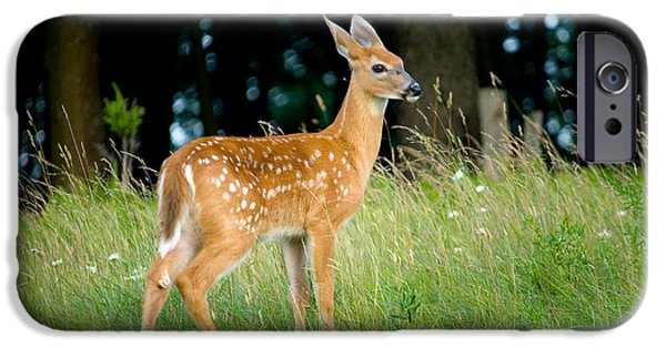 Fawn IPhone 6s Case by Shane Holsclaw