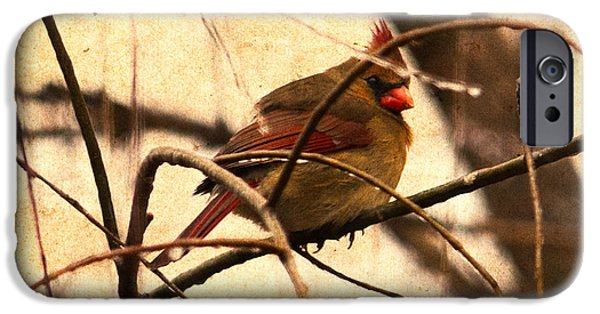 Female Cardinal In The Winter Willow IPhone Case by Jon Woodhams