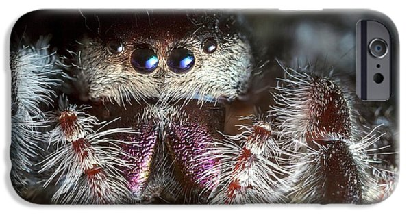 Female Regal Jumping Spider IPhone Case by Alex Hyde