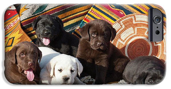 Five Labrador Retriever Puppies Of All IPhone Case by Zandria Muench Beraldo