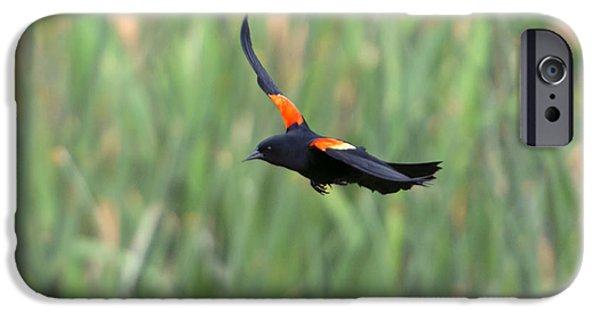 Flight Of The Blackbird IPhone Case by Mike  Dawson