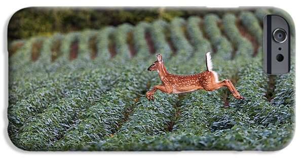 Flight Of The White-tailed Deer IPhone 6s Case by Everet Regal