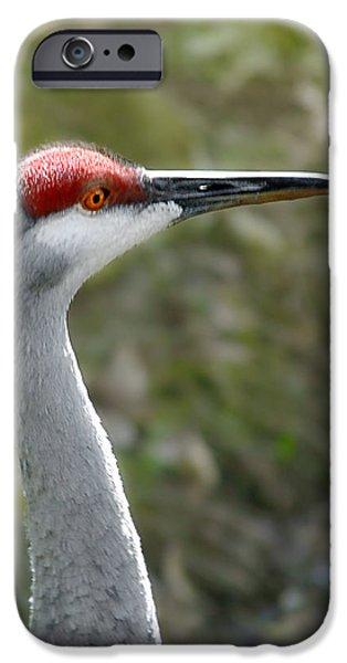 Florida Sandhill Crane IPhone Case by Christine Till