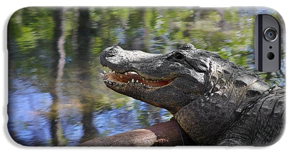 Florida - Where The Alligator Smiles IPhone 6s Case by Christine Till